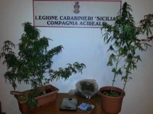 Le piante sequestrate dai carabinieri di Acireale