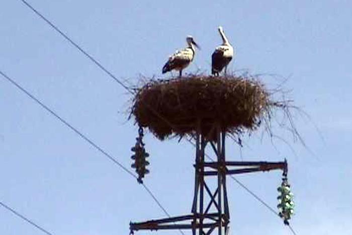 20090311 - NAPOLI - AMB ANIMALI:TORNA NIDO CICOGNE SU TRALICCIO ENEL NEL SALERNITANO Anche quest'anno le cicogne tornano a nidificare, nel Salernitano, su un traliccio dell'Enel. Un fenomeno verificatosi per la prima volta nel 1996, e che si e' rinnovato in seguito: in localita' Termini, a Sala Consilina, c'e' ora uno dei tre soli siti di nidificazione delle cicogne in Italia meridionale, tutti e tre su tralicci Enel. Negli ultimi tredici anni sono state 25 le cicogne nate e involatesi da Sala Consilina.