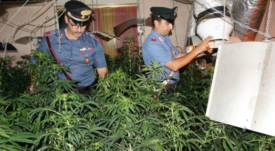 Gaetano di Gregorio è stato arrestato con l'accusa di coltivazione e detenzione ai fini di spaccio di sostanze stupefacenti e furto aggravato.