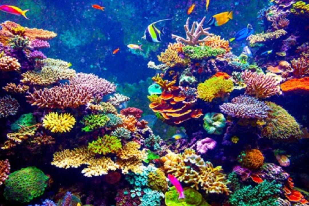 Isole eolie scoperte straordinarie foreste di coralli e for Immagini coralli marini