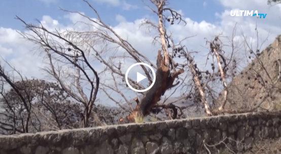 Diversi incendi nella notte hanno colpito gran parte della provincia del capoluogo siciliano. Registrati numerosi danni in città.