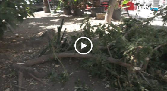 Versa in grave stato di degrado la piazza Aquileia, un'area alle spalle del Corso Italia. Gli alberi centenari hanno bisogno di una potatura urgente.