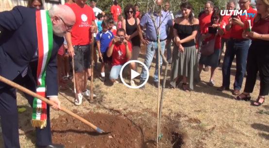 Sei ulivi sono stati piantati questa mattina al Parco Uditore nel giorno del 26esimo anniversario della strage di via D'Amelio.