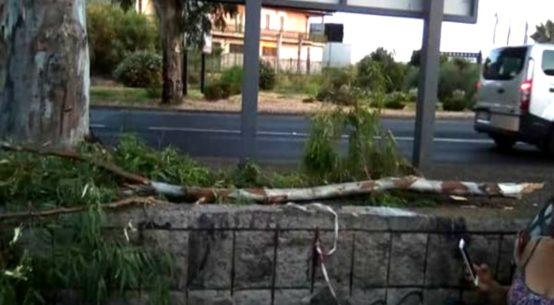 Un grosso ramo di eucalyptus è caduto questa mattina all'altezza della rotonda nuova, rischiando di colpire in pieno un motorino che passava di lì.