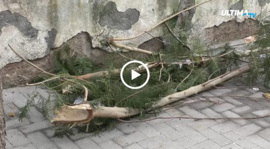 In via Pirandello a Catania i residenti segnalano la presenza di alberi pericolanti e non curati ma già al vaglio dell'amministrazione comunale.