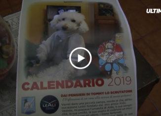 """Presentato a Palermo il calendario 2019 del cane conosciuto come """"Tommy lo scrutatore"""" con l'obbiettivo di ottenere proventi per progetti sociali."""